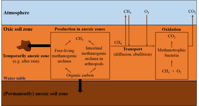 methane-in-soil