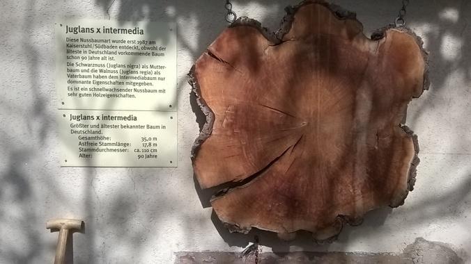 Informationstafel der Baumschule Schott